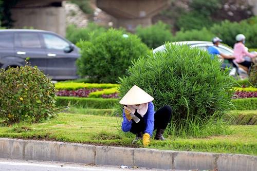 Chi 53 tỷ cắt cỏ tỉa cây, đại lộ Thăng Long vẫn như rừng - 15