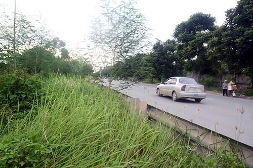 Chi 53 tỷ cắt cỏ tỉa cây, đại lộ Thăng Long vẫn như rừng - 3