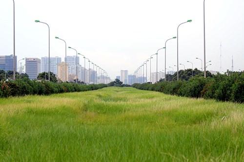Chi 53 tỷ cắt cỏ tỉa cây, đại lộ Thăng Long vẫn như rừng - 5