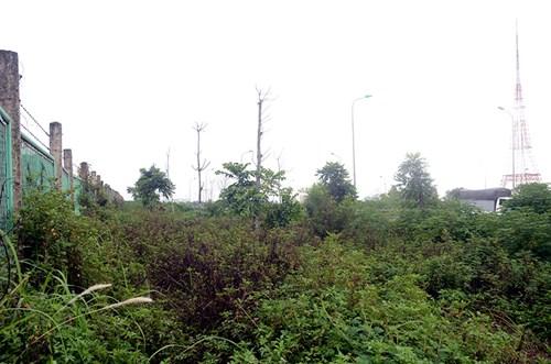 Chi 53 tỷ cắt cỏ tỉa cây, đại lộ Thăng Long vẫn như rừng - 7