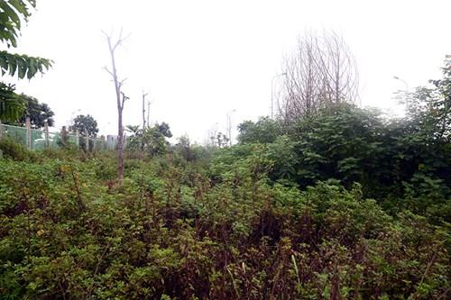 Chi 53 tỷ cắt cỏ tỉa cây, đại lộ Thăng Long vẫn như rừng - 8
