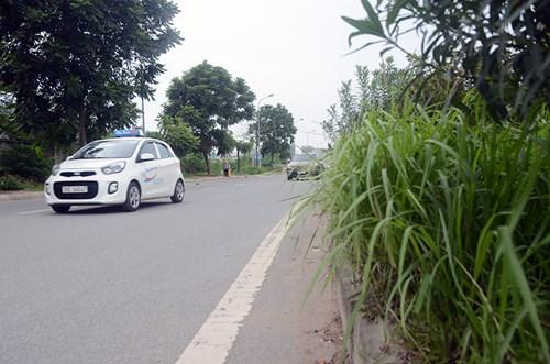 Chi 53 tỷ cắt cỏ tỉa cây, đại lộ Thăng Long vẫn như rừng - 9