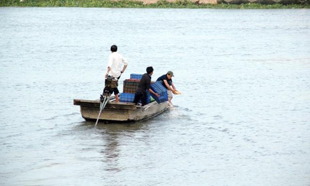 Cá vừa được phóng sinh xuống sông Sài Gòn đã bị tóm - 13