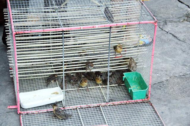 Xác chim phóng sinh nằm la liệt sau lễ Vu Lan - 2