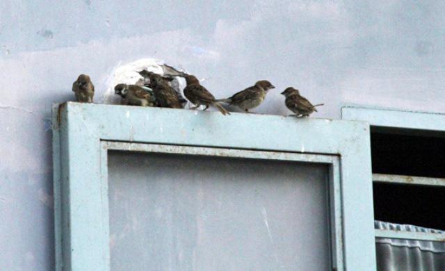 Xác chim phóng sinh nằm la liệt sau lễ Vu Lan - 10