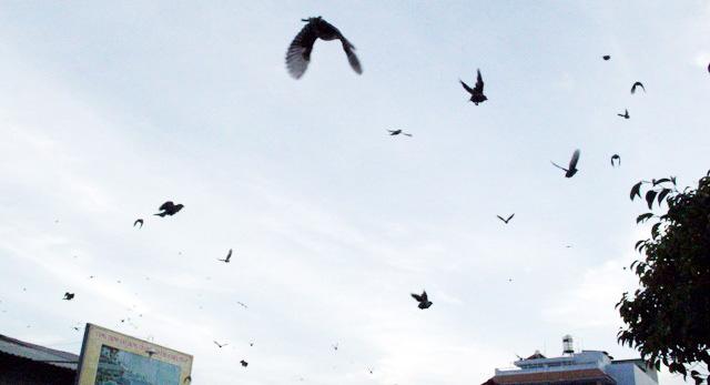 Xác chim phóng sinh nằm la liệt sau lễ Vu Lan - 12