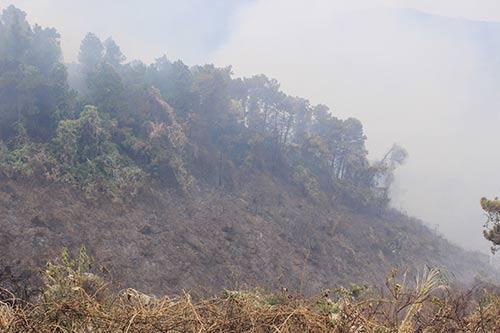 Cháy lớn ở rừng Hải Vân, hơn 500 người tham gia dập lửa - 1