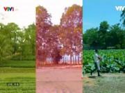 Du lịch - Khám phá ngôi làng tỏa hương thơm ở xứ Nghệ