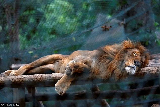 Dân Venezuela vào vườn thú giết ngựa quý ăn chống đói - 2