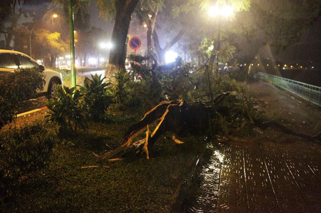 Hà Nội: Mưa dữ dội, ngập lụt, cây đổ vì bão Thần Sét - 9