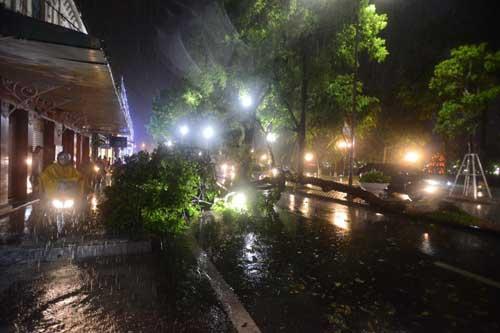 Hà Nội: Mưa dữ dội, ngập lụt, cây đổ vì bão Thần Sét - 7