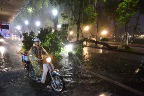 Hà Nội: Mưa dữ dội, ngập lụt, cây đổ vì bão Thần Sét - 8
