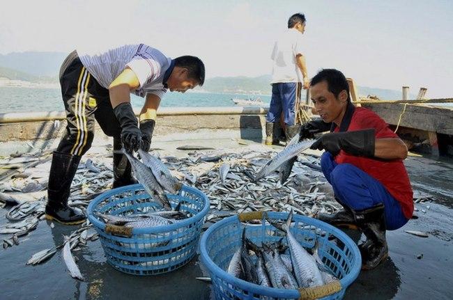 Lối thoát cho Philippines và TQ sau vụ kiện Biển Đông - 5