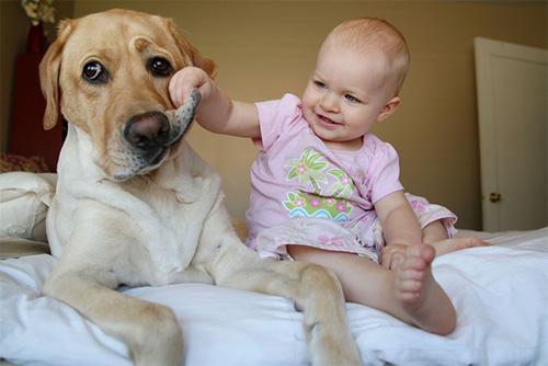 Hãy cười như lũ trẻ vui vẻ bên chó mèo - 2