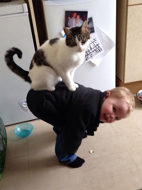 Hãy cười như lũ trẻ vui vẻ bên chó mèo - 4