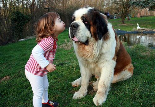 Hãy cười như lũ trẻ vui vẻ bên chó mèo - 9