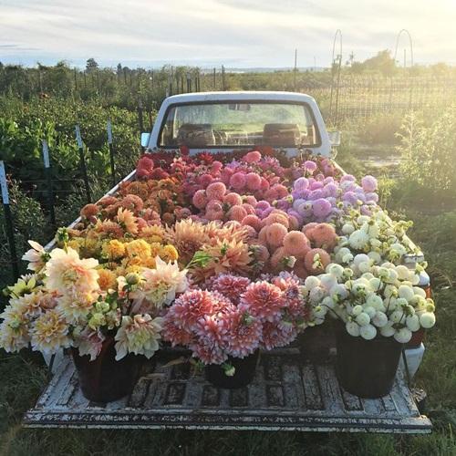 Cô gái trẻ chứng minh bán hoa là nghề tuyệt vời nhất - 3