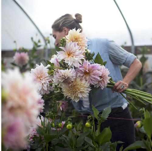Cô gái trẻ chứng minh bán hoa là nghề tuyệt vời nhất - 5