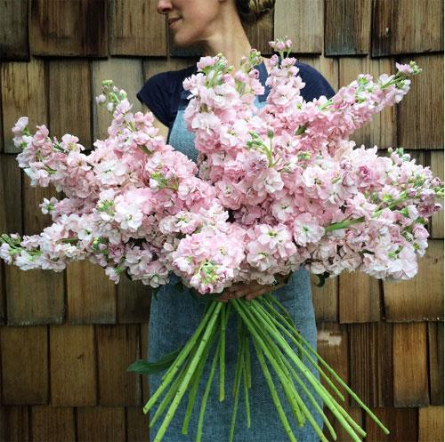 Cô gái trẻ chứng minh bán hoa là nghề tuyệt vời nhất - 2
