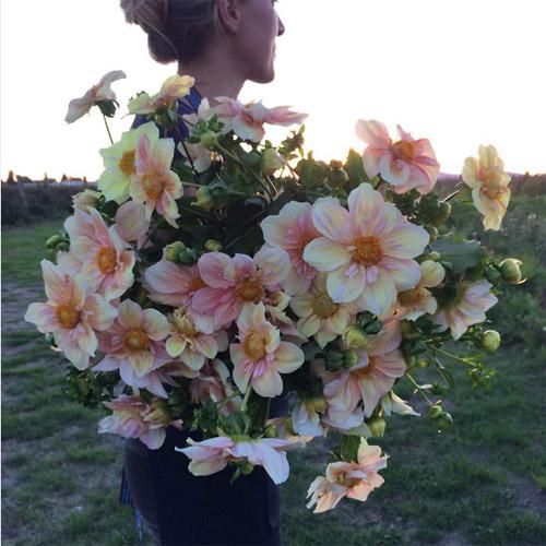 Cô gái trẻ chứng minh bán hoa là nghề tuyệt vời nhất - 9