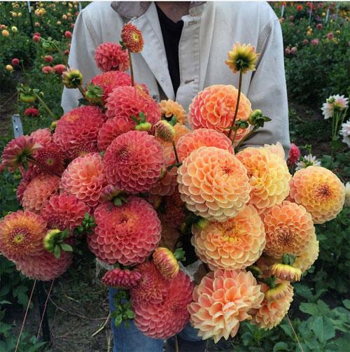 Cô gái trẻ chứng minh bán hoa là nghề tuyệt vời nhất - 10