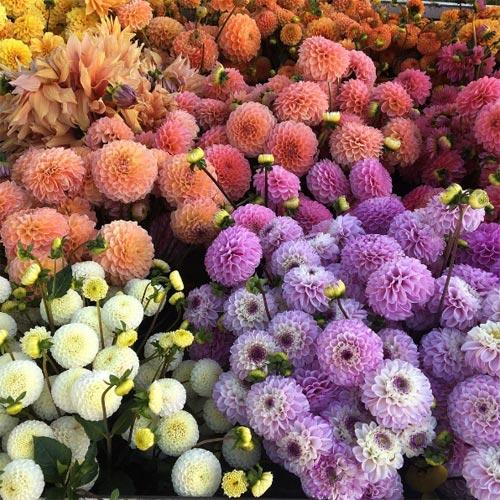 Cô gái trẻ chứng minh bán hoa là nghề tuyệt vời nhất - 12