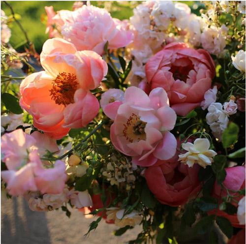 Cô gái trẻ chứng minh bán hoa là nghề tuyệt vời nhất - 14