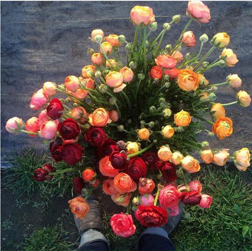 Cô gái trẻ chứng minh bán hoa là nghề tuyệt vời nhất - 15