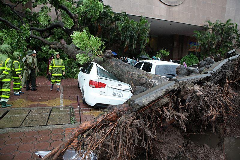 Hà Nội: Bão chưa về, cây xanh đã bật gốc đè nát ô tô - 1