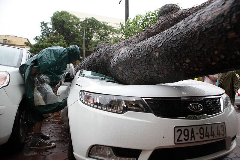 Hà Nội: Bão chưa về, cây xanh đã bật gốc đè nát ô tô - 3
