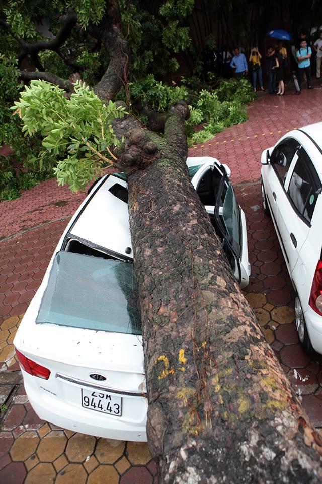 Hà Nội: Bão chưa về, cây xanh đã bật gốc đè nát ô tô - 4