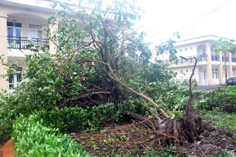 Bão Thần Sét đã suy yếu thành áp thấp nhiệt đới - 5