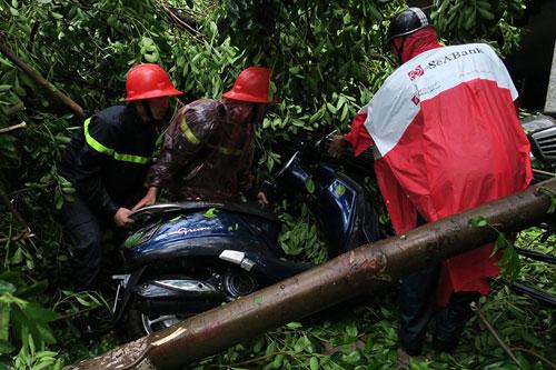 HN: Bão Thần Sét giật tung 100 gốc cây, làm bị thương 2 người - 1