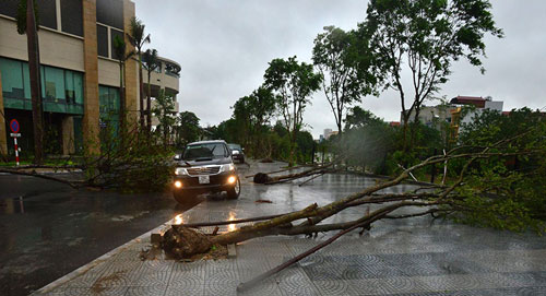 HN: Bão Thần Sét giật tung 100 gốc cây, làm bị thương 2 người - 2