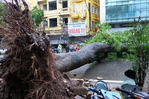 HN: Bão Thần Sét giật tung 100 gốc cây, làm bị thương 2 người - 4