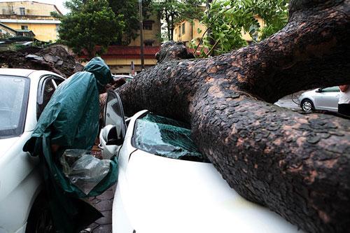 HN: Bão Thần Sét giật tung 100 gốc cây, làm bị thương 2 người - 3