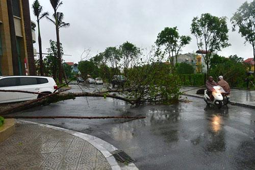 HN: Bão Thần Sét giật tung 100 gốc cây, làm bị thương 2 người - 5