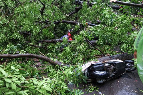 HN: Bão Thần Sét giật tung 100 gốc cây, làm bị thương 2 người - 7