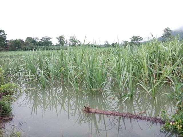 Nhiều nơi ở Nghệ An, Thanh Hóa bị cô lập sau bão số 3 - 3