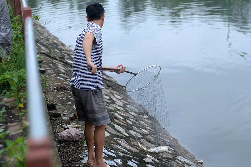 Dân Thủ đô đổ xô đi bắt cá sau bão Thần Sét - 2