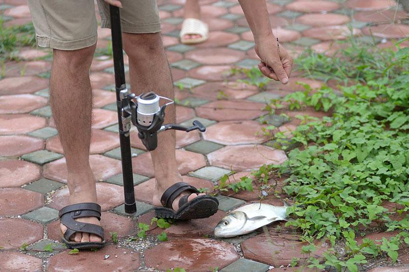 Dân Thủ đô đổ xô đi bắt cá sau bão Thần Sét - 4