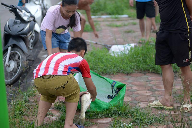 Dân Thủ đô đổ xô đi bắt cá sau bão Thần Sét - 9