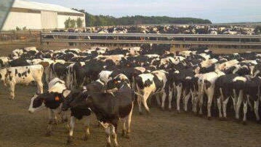 """Bể phốt """"xông hơi"""" giết 1 nông dân và 16 con bò - 3"""