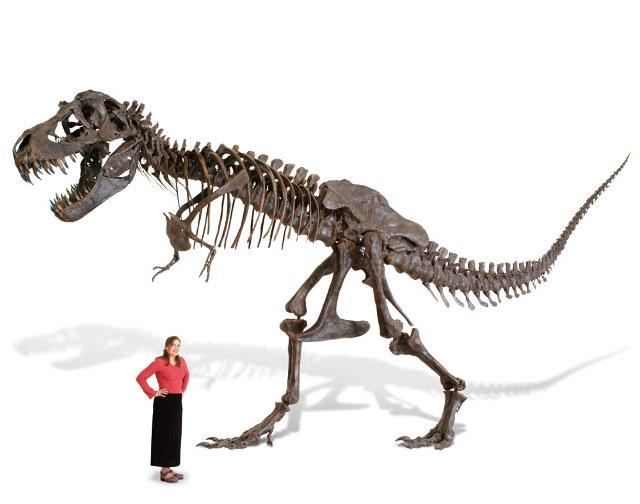 Tranh cãi về loài khủng long chưa từng tồn tại - 3