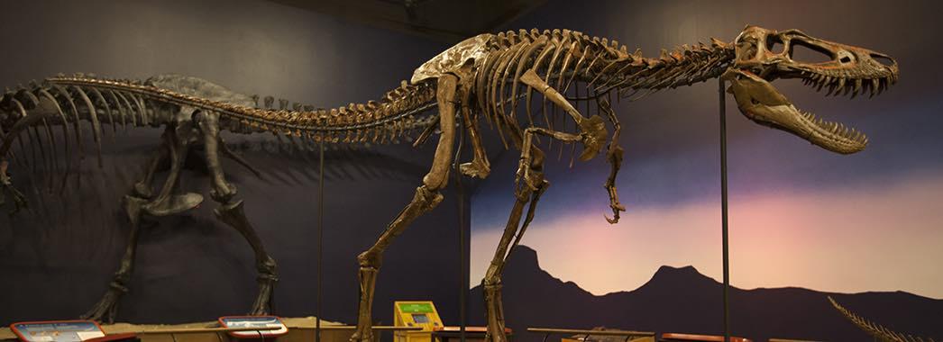 Tranh cãi về loài khủng long chưa từng tồn tại - 1