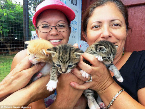 Thiên đường dành cho người yêu mèo ở Hawaii - 2