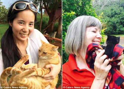Thiên đường dành cho người yêu mèo ở Hawaii - 3