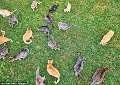 Thiên đường dành cho người yêu mèo ở Hawaii - 4