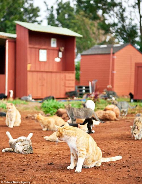Thiên đường dành cho người yêu mèo ở Hawaii - 8