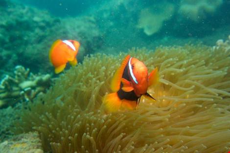 Biển Cù Lao Chàm tuyệt đẹp dưới ống kính du khách - 1